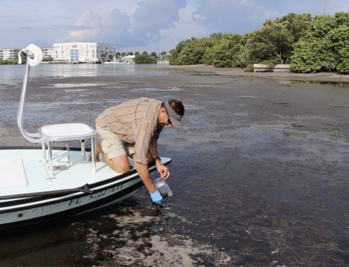 New Florida Laws and Funding Set the Stage for Clean Water