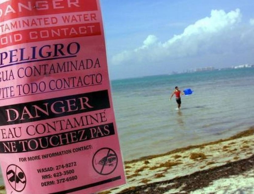 Biscayne Bay is suffocating, and Miami-Dade County leaders continue to let it die